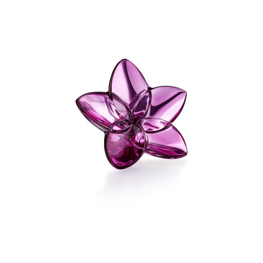 THE BLOOM COLLECTION, Rosa
